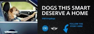 Driving Dogs 2