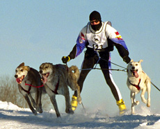 Skiing with dogs 2