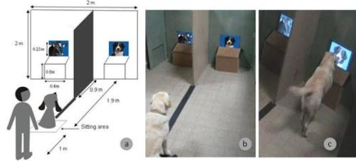 Apparatus. a, b The dog sits in front of the experimenter, on a line between the 2 screens. c When hearing an order, the dog expressed his choice by going to a given screen and putting his paw in front of the chosen image. (Credit: Image courtesy of Springer Science+Business Media)
