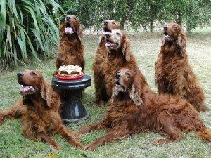 The Irish Setter, pictured here are Daisy Sheridan and family at her birthday in 2010