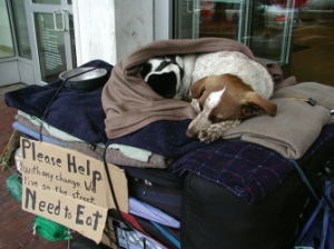photo courtesy of Pets of the Homeless
