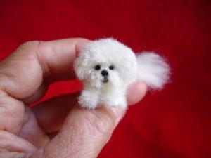 Bichon Frise miniature