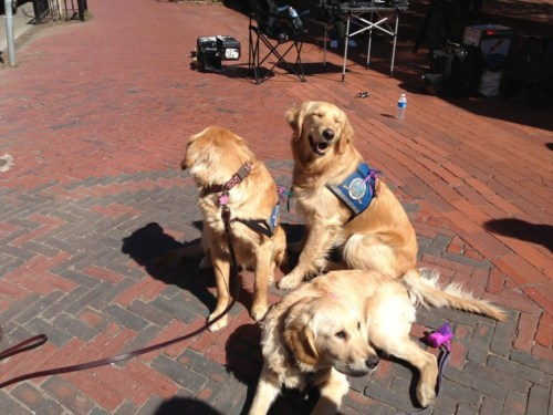 Comfort dogs in Boston