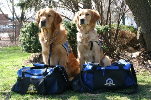 Luther and Ruthie are two comfort dogs provided by Lutheran Church Charities