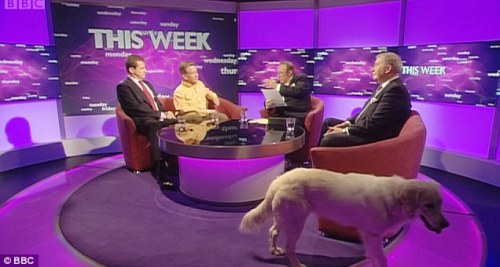 Miss Molly roams around the set as guests are interviewed (photo courtesy of the BBC)