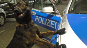 police dog wearing shoes