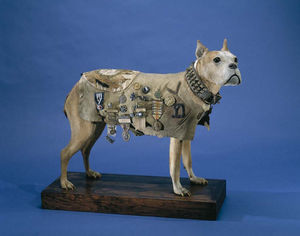 Stubby, including his coat, are on display at the Smithsonian in Washington DC.