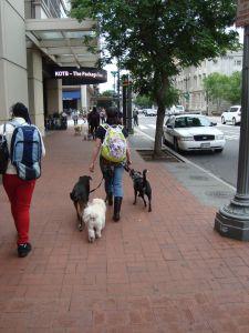 Professional dog walker