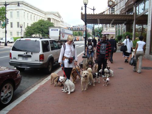 Professional dog walkers _ front view