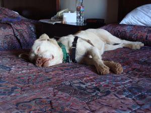 Sleeping Timothy