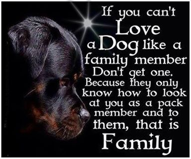 Dogs and family