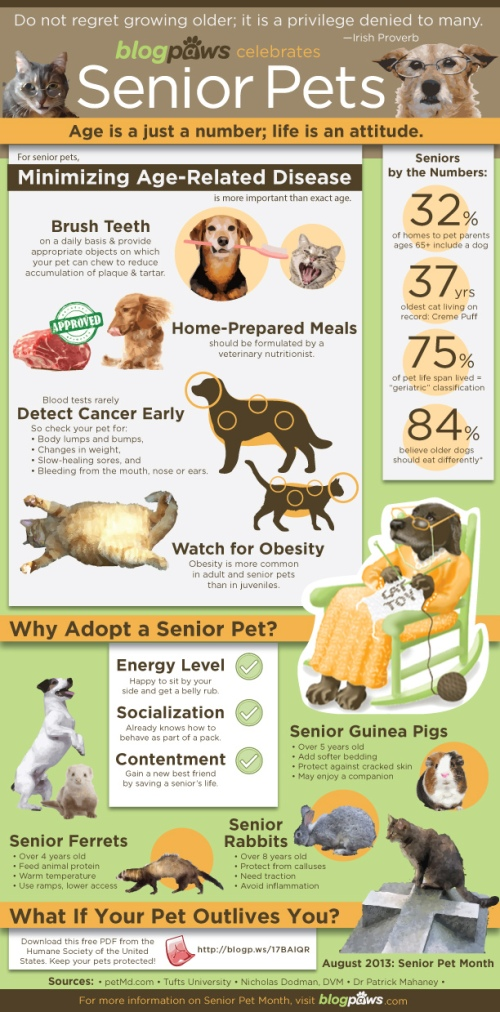 Blog paws seniors