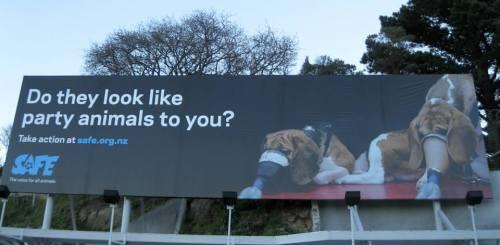 A billboard by SAFE in Wellington