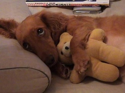 Dog with teddy bear