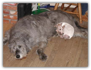 Lily with Irish Wolfhound