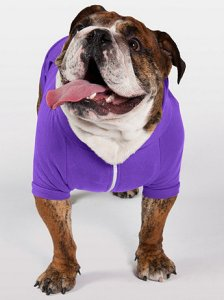 Bulldog in purple fleece