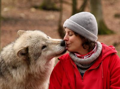 The researchers conclude that the ability to learn from other species, including humans, is not unique to dogs but was already present in their wolf ancestors. Prehistoric humans and the ancestors of dogs could build on this ability to better coordinate their actions.  Photo by Wolf Science Center