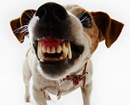 Dog bearing teeth
