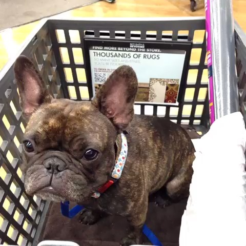 Enzo at Bed Bath and Beyond