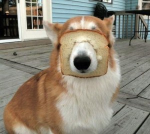 breading dog 2