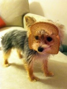breading dog 3