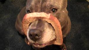 Breading dog