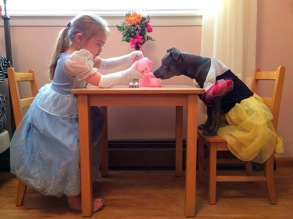 Pit bull tea party