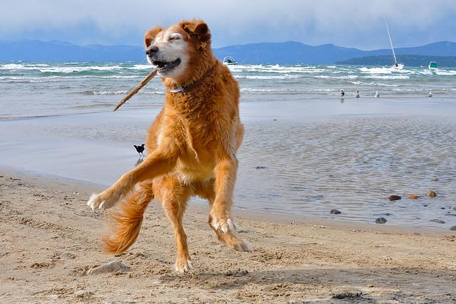 Dancing Dog Adoption