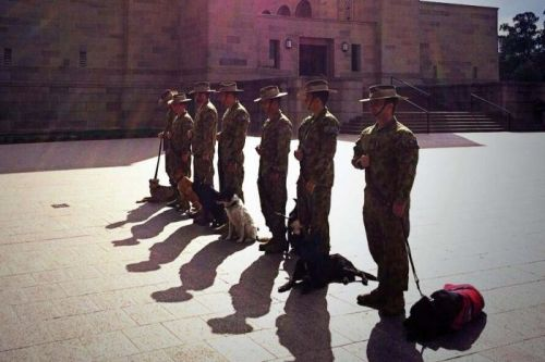 Soldiers with their dogs stand at the Australian War Memorial (photo by Siobhan Heanue, ABC)