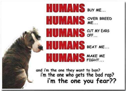 Pit bull poster