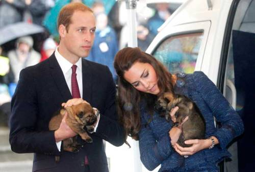 William and Kate cuddle with police dog puppies (photo by Getty)