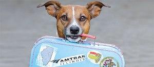 Amtrak pets