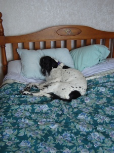 Daisy bed photo