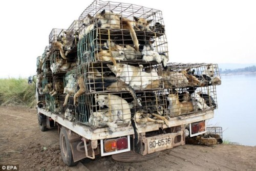 Smugglers kidnap pet dogs as they are easier to catch than strays, and sell the skin to leather manufacturers in China and Vietnam Copyright EPA