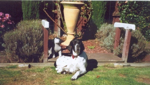 In April 2008, Daisy helped to pose in the garden to show off some new landscaping