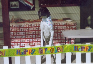 In April 2008, we celebrated Daisy's 8th birthday a wee bit in advance as part of launching Canine Catering