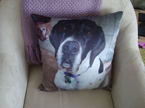 Daisy's Pillow