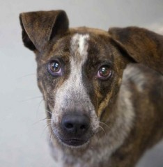 Photo courtesy of Lucky Dog Animal Rescue