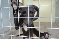 Photo courtesy of Jerry Green Dog Rescue