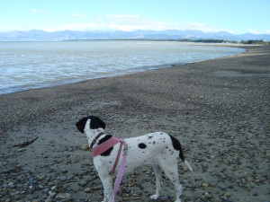We celebrated our 10th anniversary together by taking a trip to Ruby Bay.  Daisy was so happy during our 5 days there.