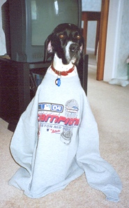 In 2004, Daisy allowed me to dress her in a Boston Red Sox sweatshirt to celebrate their World Series win