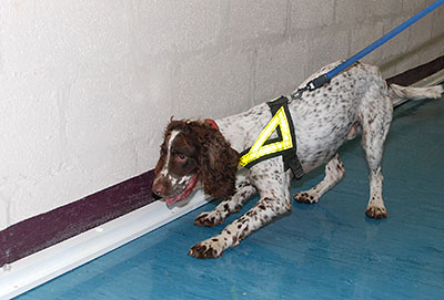 Kip, a victim recovery dog from the South Yorkshire Police department, has been helping in the research (photo courtesy of University of Huddersfield)