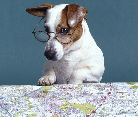 Map reading dog