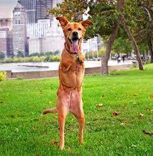 Faith the dog 1