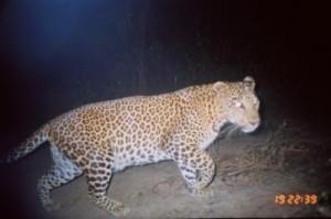 Photo courtesy of Wildlife Conservation Society