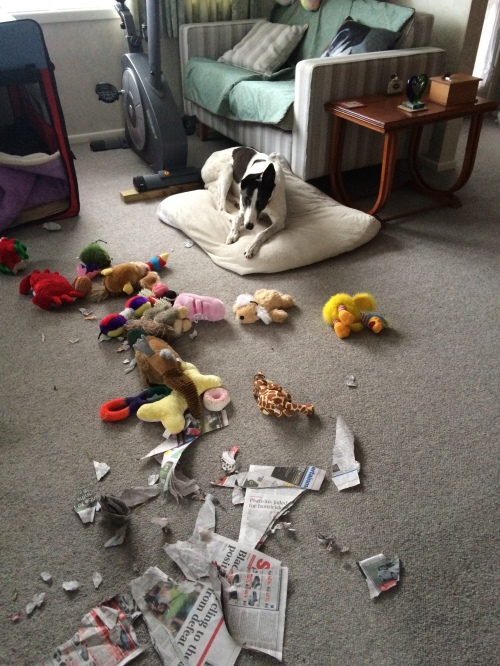 Thanks for the toys and the newspaper Oct 2014