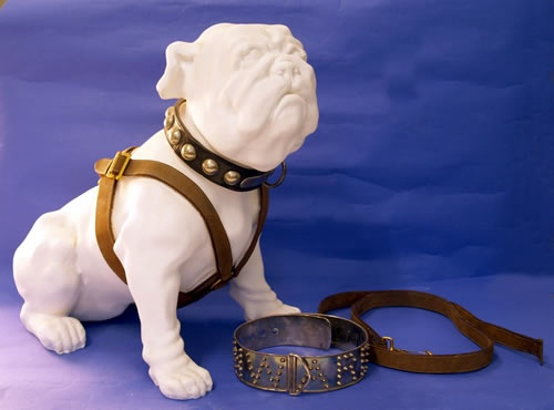 A model of Pelorus Jack with his collar and leads (photo courtesy of NZ History)