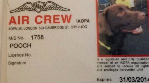 As an official member of air crew, Callie's identification card helps her to clear airport security.  The card was issued by the Aircraft Owners and Pilots Association (AOPA)