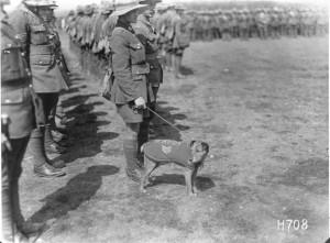 First Irish Regiment Mascot Dog Name