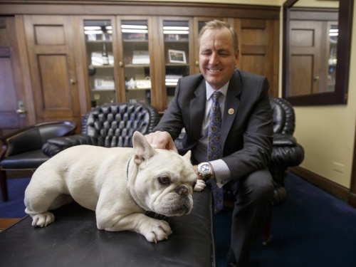 Rep. Jeff Denham, R-Calif., gives some attention to Lily, his 15-pound French bulldog, Feb. 15 in his office on Capitol Hill in Washington. Lily once was rejected by Amtrak, but the House passed a measure Wednesday that would let her ride with her owner.  Photo by J. Scott Applewhite/AP